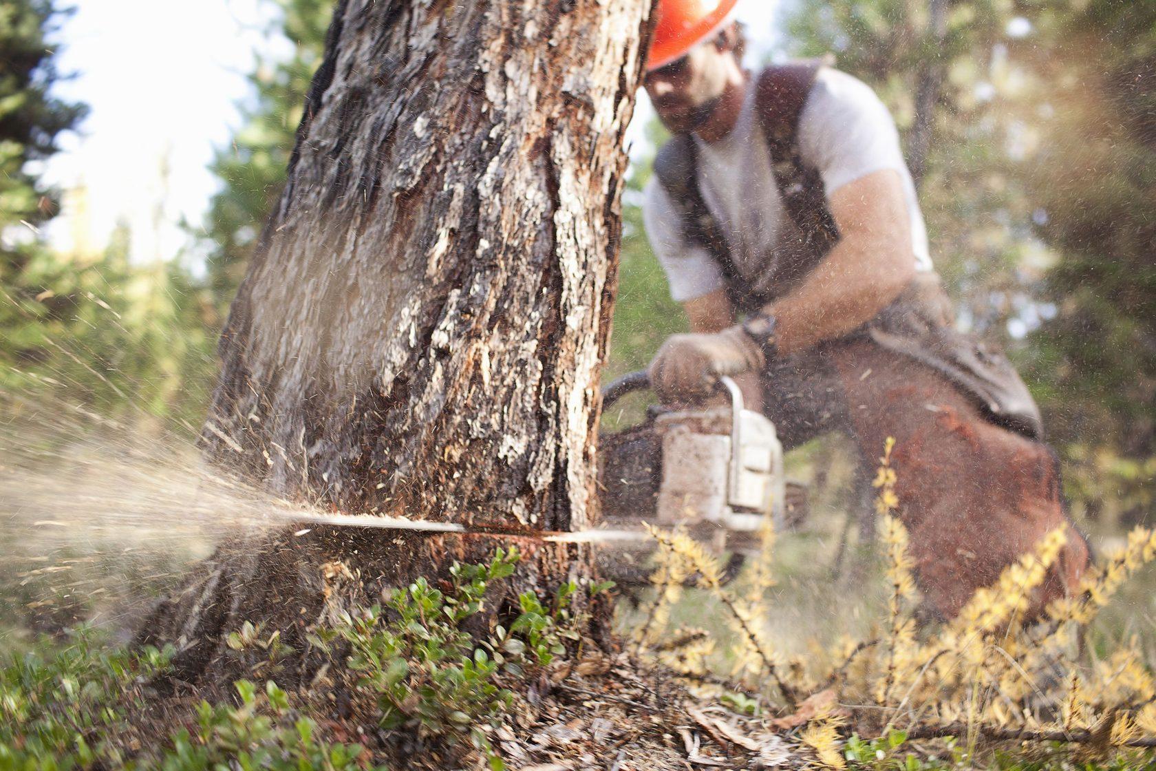 вырубают деревья картинки чаще проветривать